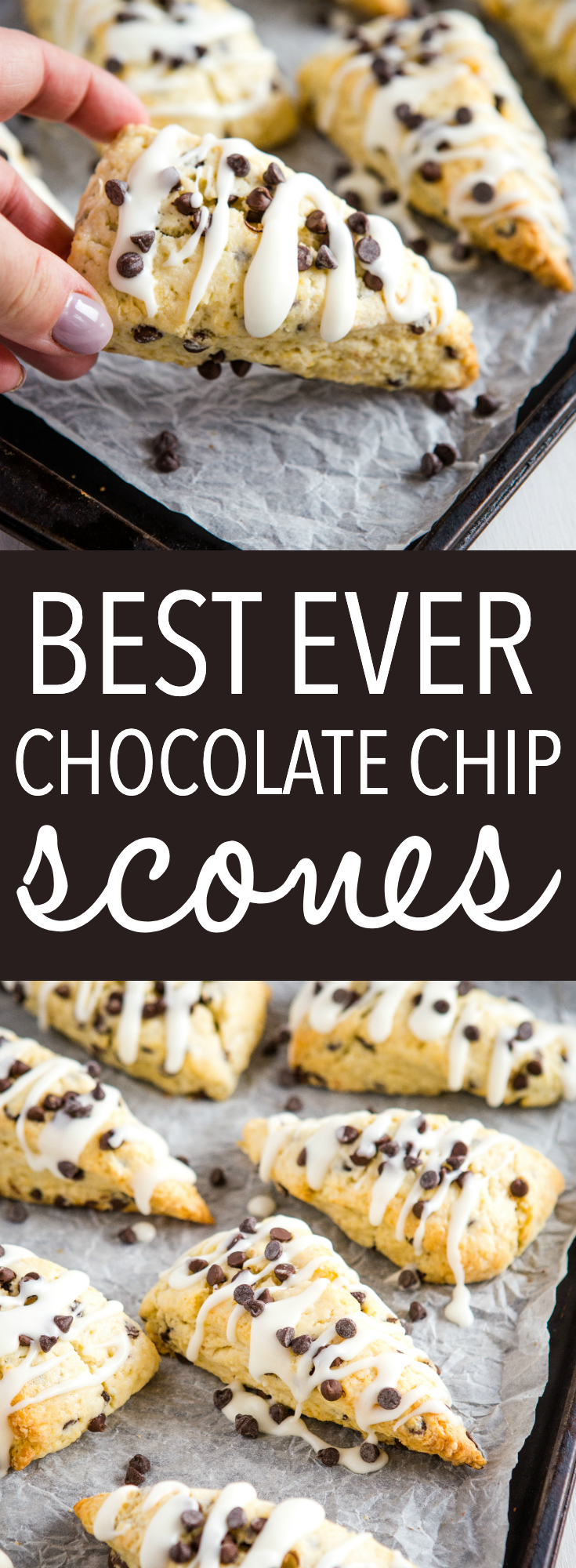 These Best Ever Chocolate Chip Scones are the perfect snack or dessert to enjoy with coffee or tea, and they're SO easy to make for beginning bakers! Packed with mini chocolate chips and topped with a simple sweet glaze! Recipe from thebusybaker.ca! #scones #chocolatechip #baking #easyrecipe #british #tea #snack #biscuits via @busybakerblog