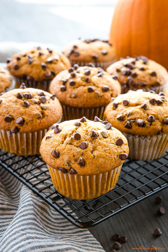 pumpkin chocolate chip muffins on cooling rack
