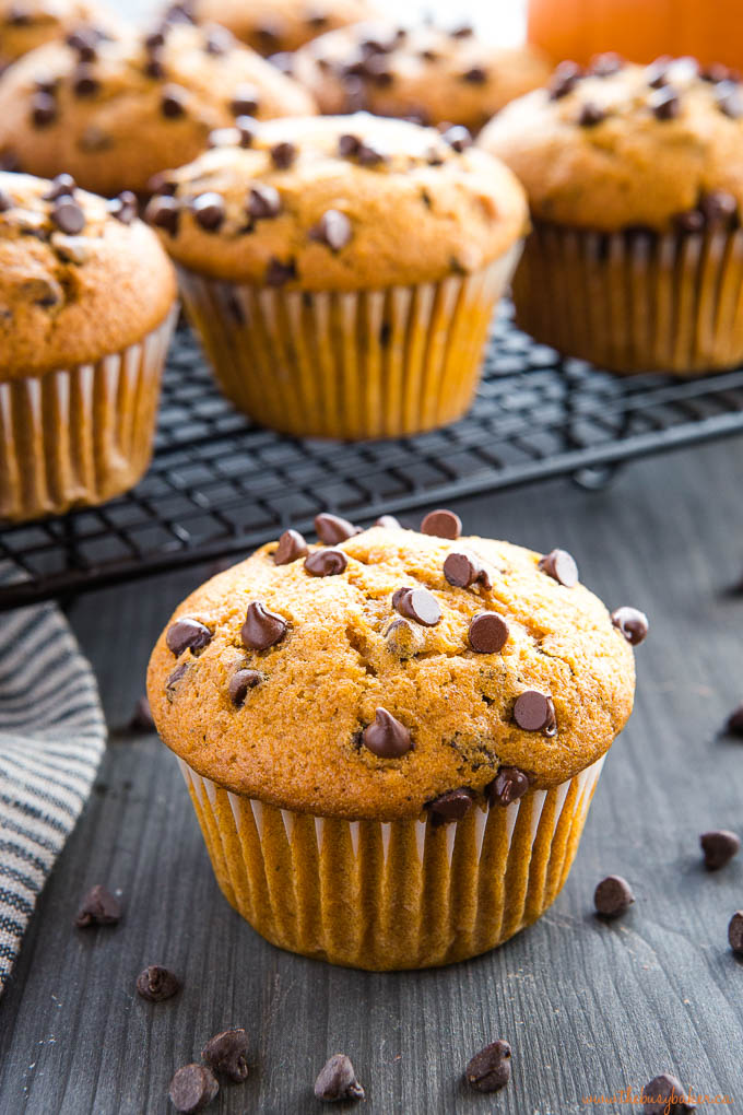 large domed top on a muffin topped with chocolate chips