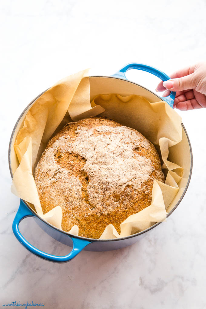 woman's hand holding handle of blue dutch oven with homemade bread baked in it