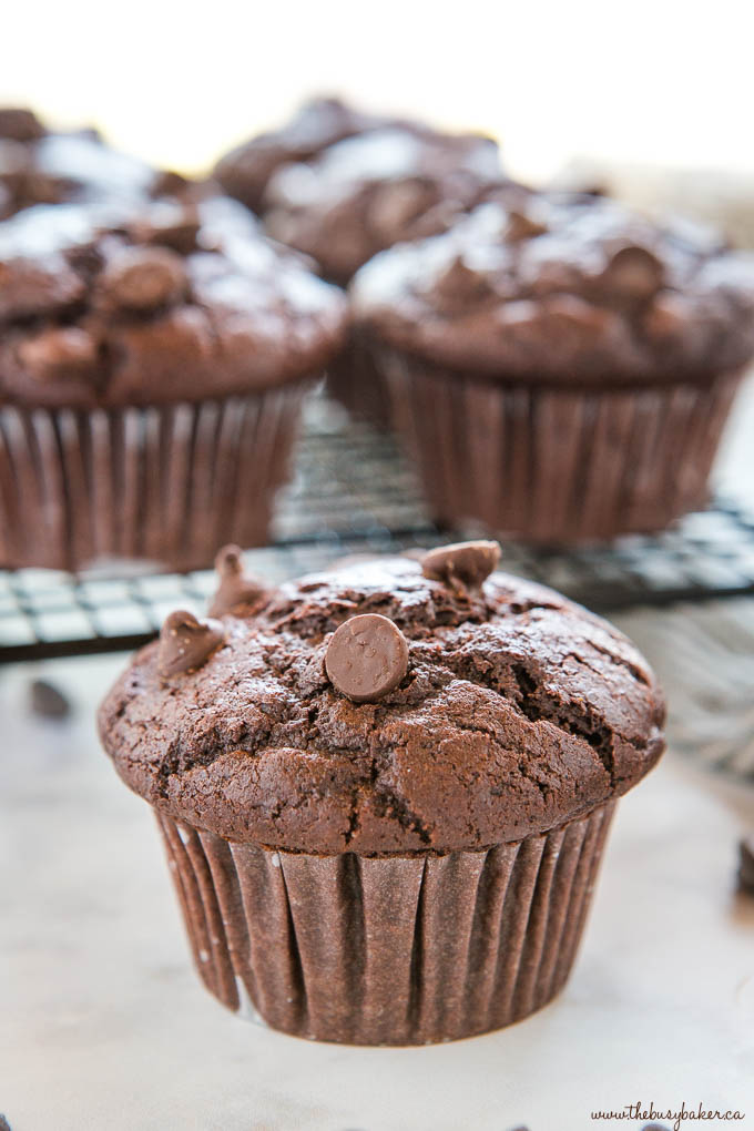 double chocolate chip muffin
