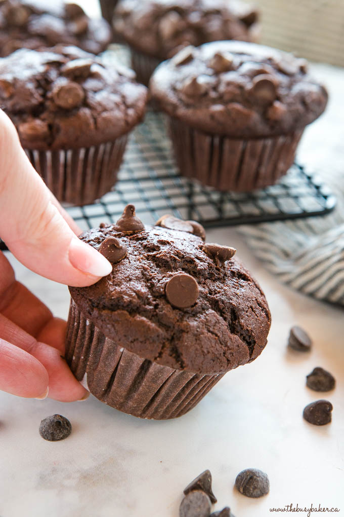 hand holding double chocolate chip muffin