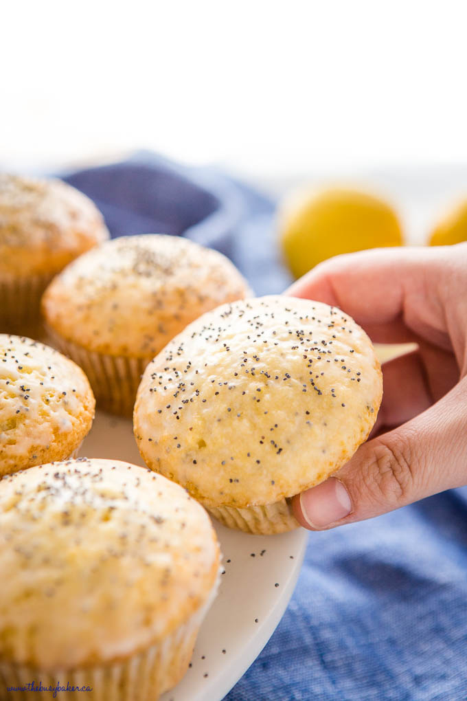 hand holding lemon muffin with poppy seeds